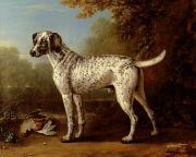 Grey Paintings - Grey spotted hound by John Wootton