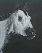 White Horse Pastels Originals - Grey Stallion by Kim Garcia