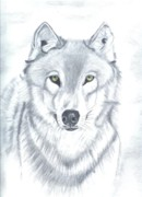 Timber Drawings Posters - Grey Timber Wolf Poster by Don  Gallacher