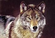 Grey Wolf Mixed Media Framed Prints - Grey Wolf Framed Print by Ellens Art