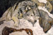 Wolf Artist Painting Posters - Grey Wolf Resting in the Snow Poster by Koro Arandia