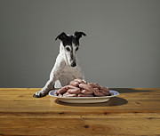 Greyhound Photos - Greyhound And Sausages by Michael Blann