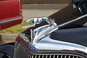 Greyhound Prints - Greyhound Hood ornament Print by Gene Ritchhart