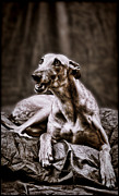Greyhound Digital Art - Greyhound by Mary Morawska