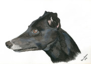 Sight Hound Framed Prints - Greyhound Framed Print by Yvonne Johnstone