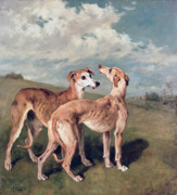 Pair Framed Prints - Greyhounds Framed Print by John Emms