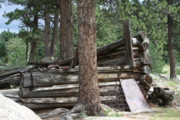 Log Cabins Photo Originals - Griffith Homestead in Homestead Meadows by Cynthia  Cox Cottam
