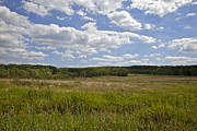 Franklin Farm Prints - Griggstown Native Grassland Preserve Print by David Letts