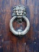 Door Knockers And Handles - Grimacing Lion by Edan Chapman