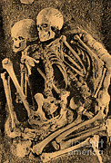 Palaeolithic Posters - Grimaldi Skeletons Poster by Science Source