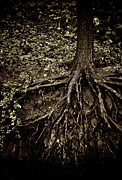 Tree Roots Photo Metal Prints - Grit Metal Print by Odd Jeppesen