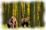 Kodiak Digital Art Prints - Grizzley Forage Print by Garry Staranchuk