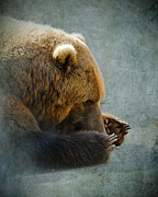 Slumber Digital Art Posters - Grizzly Bear Lying Down Poster by Betty LaRue