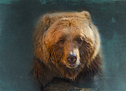 Slumber Digital Art Posters - Grizzly Bear Portrait Poster by Betty LaRue