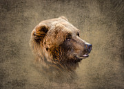 Head Shot Digital Art Prints - Grizzly Portrait Print by Betty LaRue