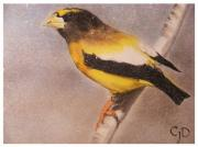 Spiritual Drawings Pastels Prints - Grossbeak Print by Crispin  Delgado