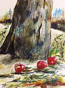 Apple Tree Drawings Posters - Ground Apples Poster by John  Williams