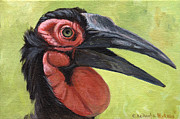 Hornbill Painting Framed Prints - Ground Hornbill Framed Print by Svetlana Ledneva-Schukina