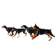 Doberman Pinscher Framed Prints - Group Of Dobermans Running Against White Background Framed Print by Thomas Northcut