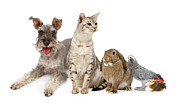 Dog And Cat Posters - Group of Domestic Pets  Poster by Susan  Schmitz