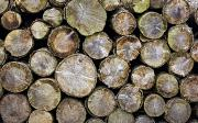 Industrial Background Posters - Group Of Logs Poster by John Short