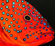 Tropical Fish Paintings - Grouper Head by Anne Marie Brown