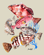 Grouper Montage Print by Kevin Brant