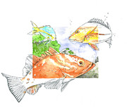 Florida Mixed Media Originals - Grouper Snapper and Yellowtail by Amber M  Moran