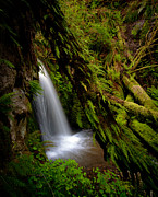 Cascades Prints - Grove of Life Print by Mike Reid
