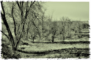 Snow Prints - Grove of Trees II Print by David Patterson