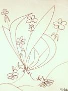 DENNY CASTO - Growing flowers