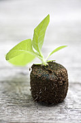 Seedlings Posters - Growth Poster by Frank Tschakert