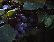 Grapes Green Prints - Grrrrapes Print by Ross Powell