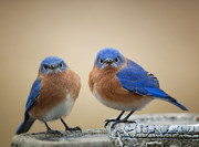 Bluebird Metal Prints - Grumpy Little Men Metal Print by Bonnie Barry