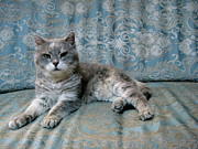 Sitting Photos - Grumpy Old Italian Cat by Photo by Claire L. Evans