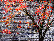 Frame House Digital Art Prints - Grunge and Fall Dogwood Print by Kathy Clark