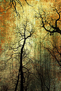 Weathered Mixed Media Originals - Grunge Forest by Christophe ROLLAND