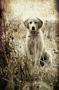 Grass Metal Prints - Grunge Puppy Metal Print by Meirion Matthias