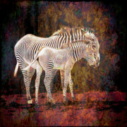 Mother And Baby Framed Prints - Grunge Zebras Framed Print by Sari Sauls