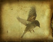 Little Bird Digital Art - Grungy Bird Art by Gothicolors And Crows