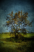 Brown Greeting Cards Prints - Grungy Fall Tree Print by Larysa Luciw