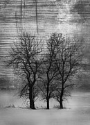 Winter Trees Photo Posters - Grungy Trees Poster by Larysa Luciw