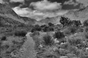West Texas Photos - Guadalupe Mountains Morning by Stephen  Vecchiotti