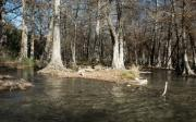 Cypress Stump Photos - Guadalupe River in Winter by Karen Musick