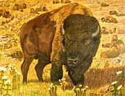 American Bison Drawings Prints - Guardian of the Herd Print by Mickael Bruce