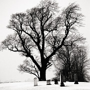 Mark Clifford - Guardian Tree- Kent...