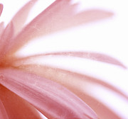 Macro Floral Photos Prints - Guess Print by Kristin Kreet
