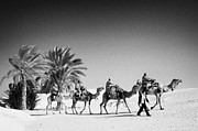 SAHARA Art - guide leading tourists on camels past palm trees in the sahara desert at Douz Tunisia by Joe Fox