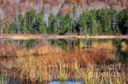 Sandwich Mountains Posters - Guinea Pond - Sandwich New Hampshire USA Poster by Erin Paul Donovan