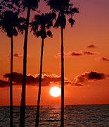 Palm Harbor Posters - Gulf Coast Sunset Poster by Bill Cannon
